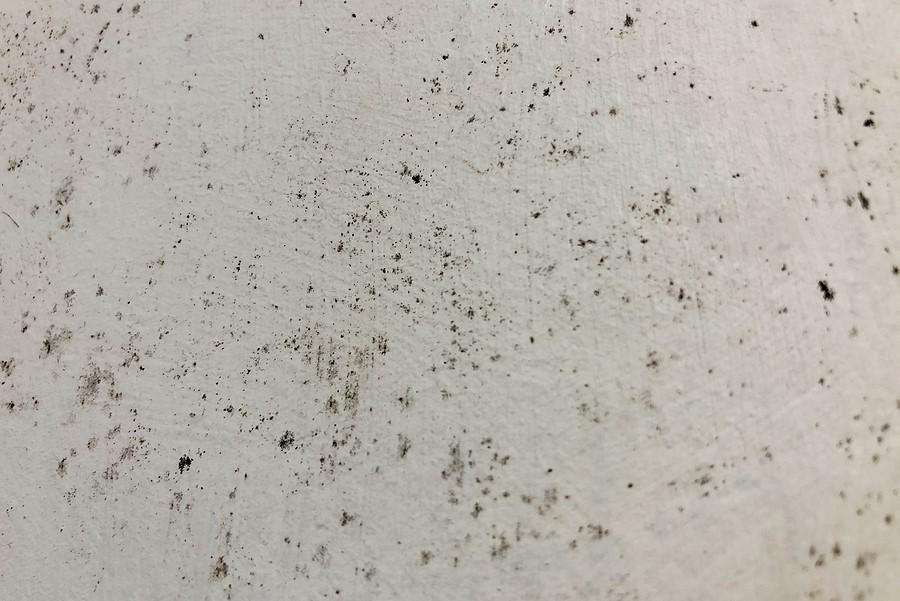The Hidden Dangers of Mold Exposure
