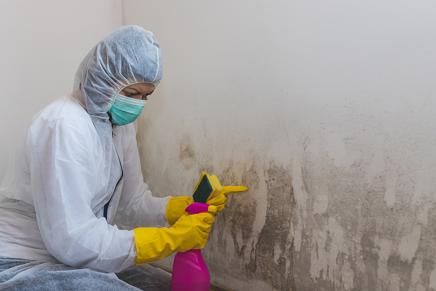 Surprising Benefits of Mold Remediation