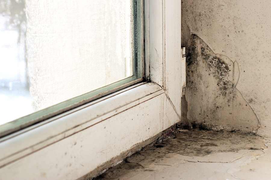 What Should I Do About Window Mold?
